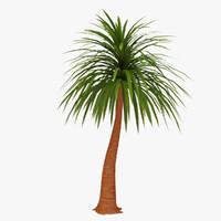 3d palm 06 model