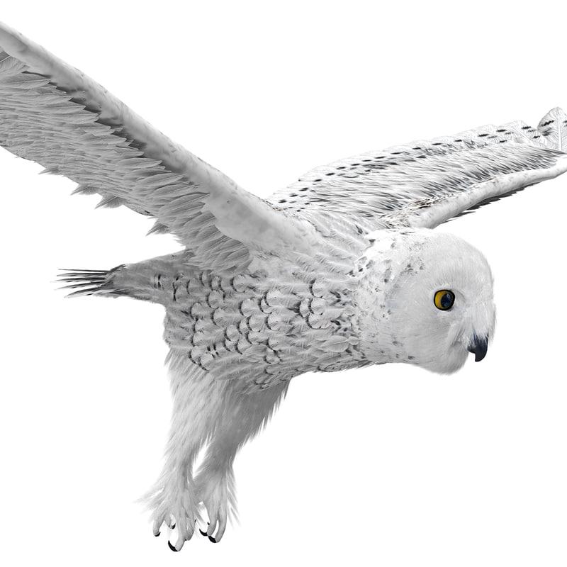snowy owl 3ds