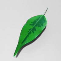 Houseplant leaf