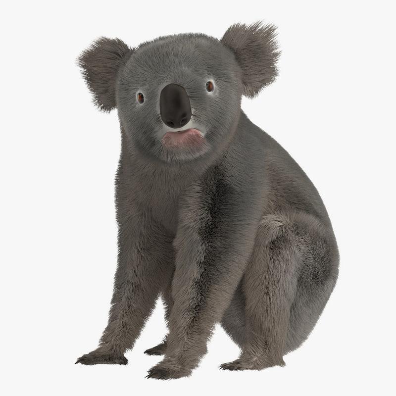 3d phascolarctos koala bear