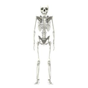 maya squeleton bones