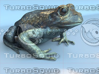 Frog Eastern
