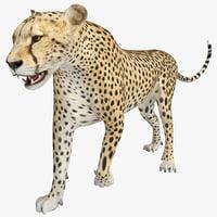 Cheetah 2 Pose 1