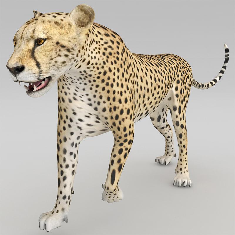 cheetah 2 pose 1 max