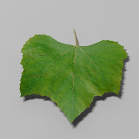 nature leaf 3d max