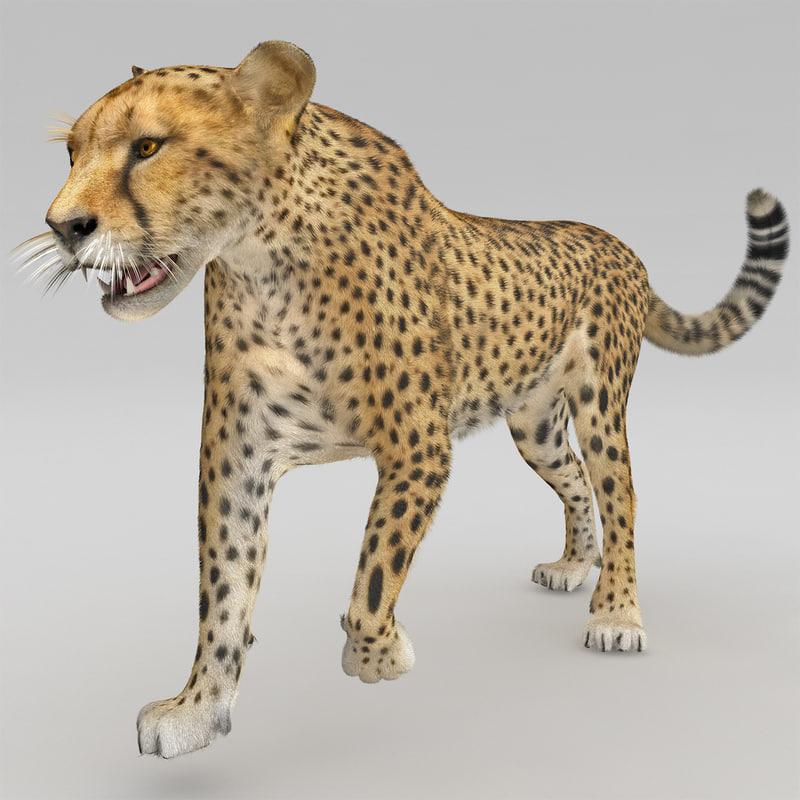 cheetah 2 pose 1 3d model