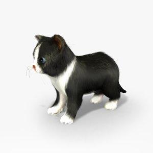 3d kitten fur