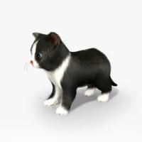 Animated Kitten (Rigged)