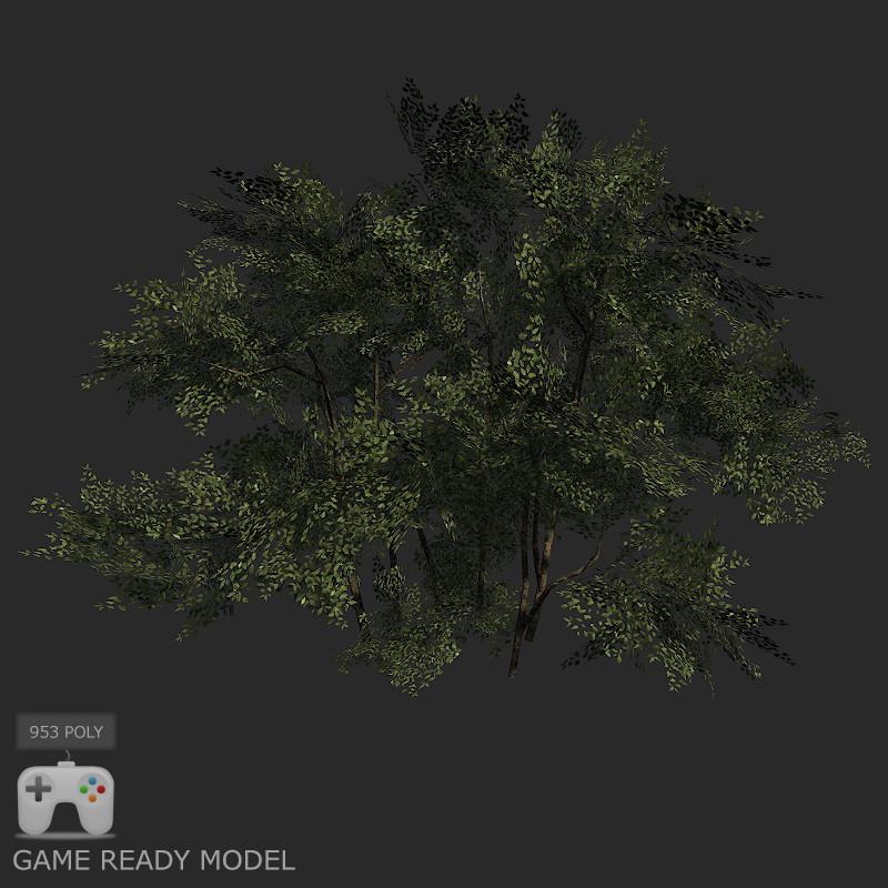 max bush