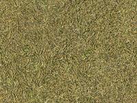 grass_11