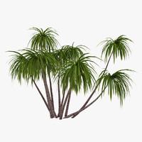 3d palm 013 model