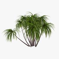 3d palm 014 model