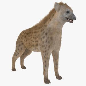 hyena fur rigged