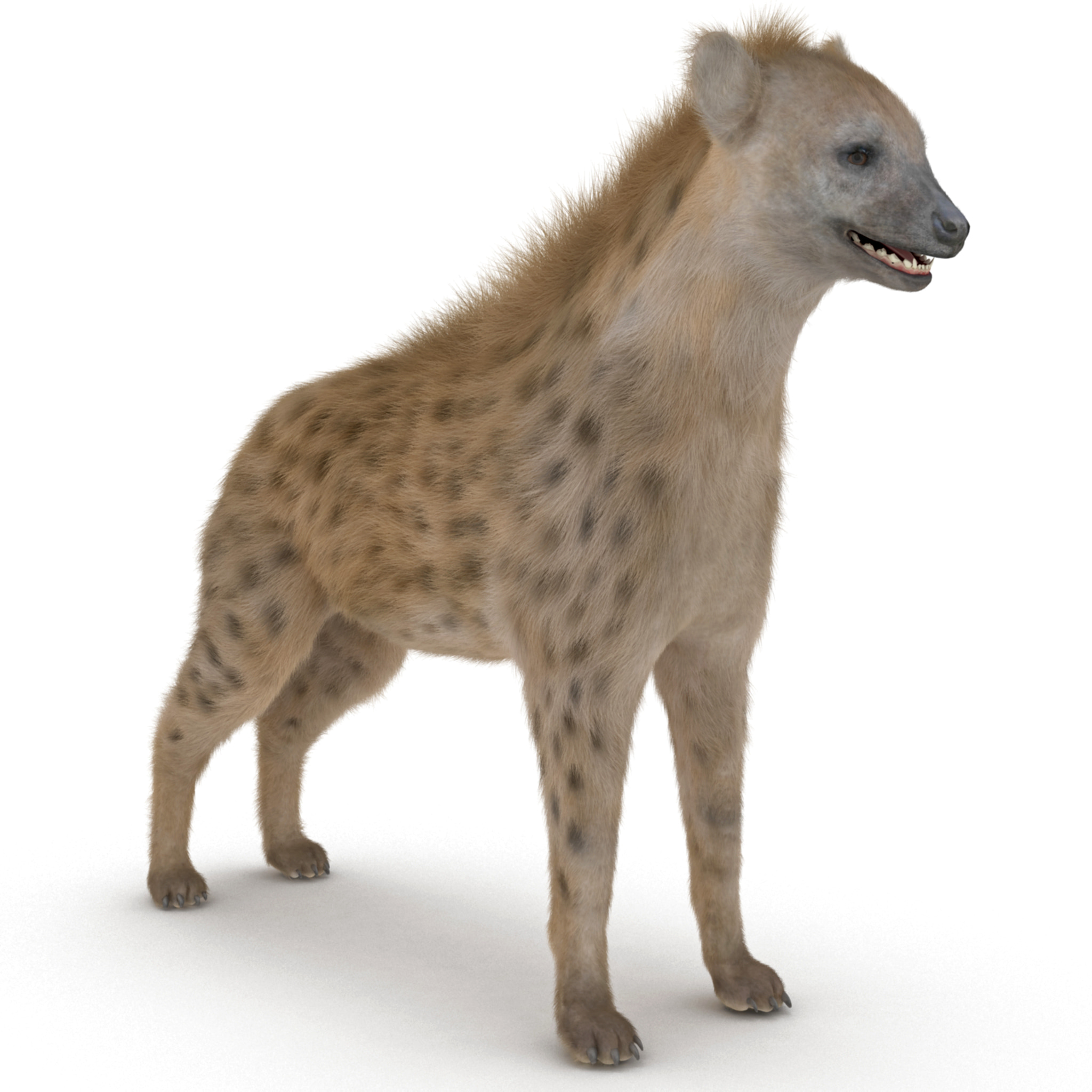 hyena fur rigged