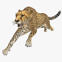 cheetah 2 pose fur 3d model