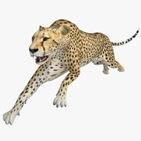 3d cheetah pose model