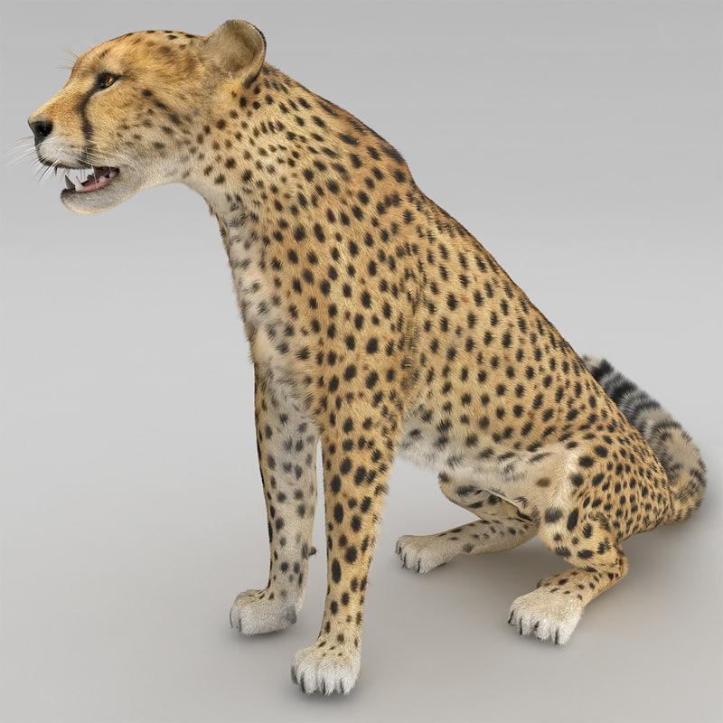 cheetah 2 pose 3 3d max