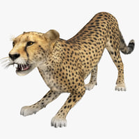 cheetah 2 pose 4 3d max
