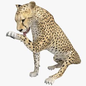 3ds max cheetah pose