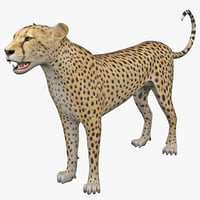 Cheetah 2 Rigged