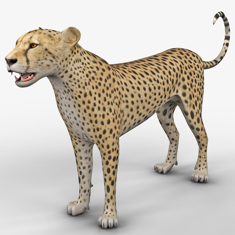 max cheetah 2 rigged