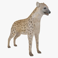 s hyena rigged animal