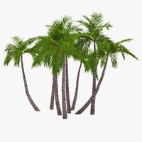 3d model palm 016