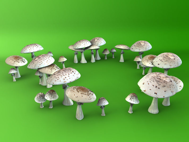 3d photo mushrooms