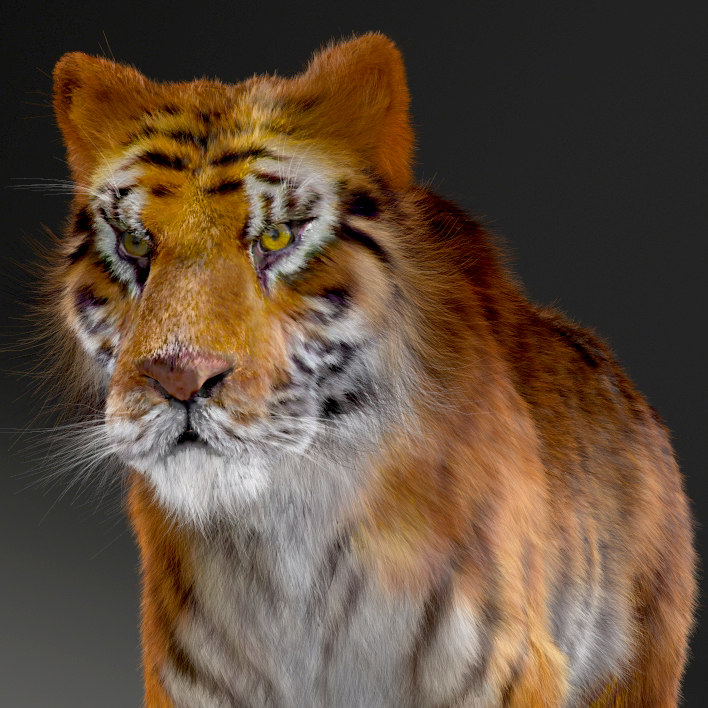 3d 3ds realistical tiger rigged