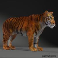 realistical tiger 3d max