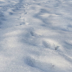 ground snow 3d model