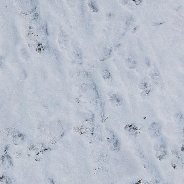 3d ground snow