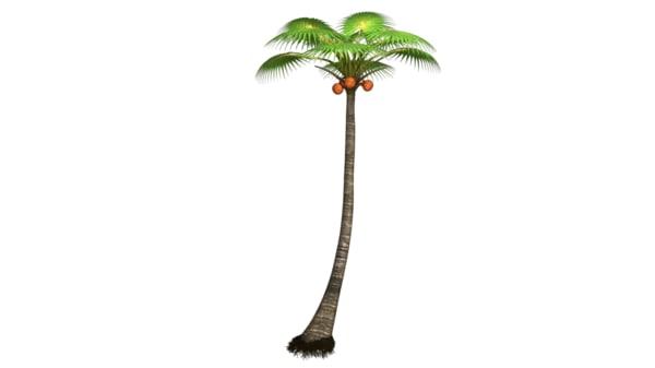palm trees obj