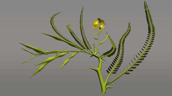 parkinsonia flowering fabaceae 3d model