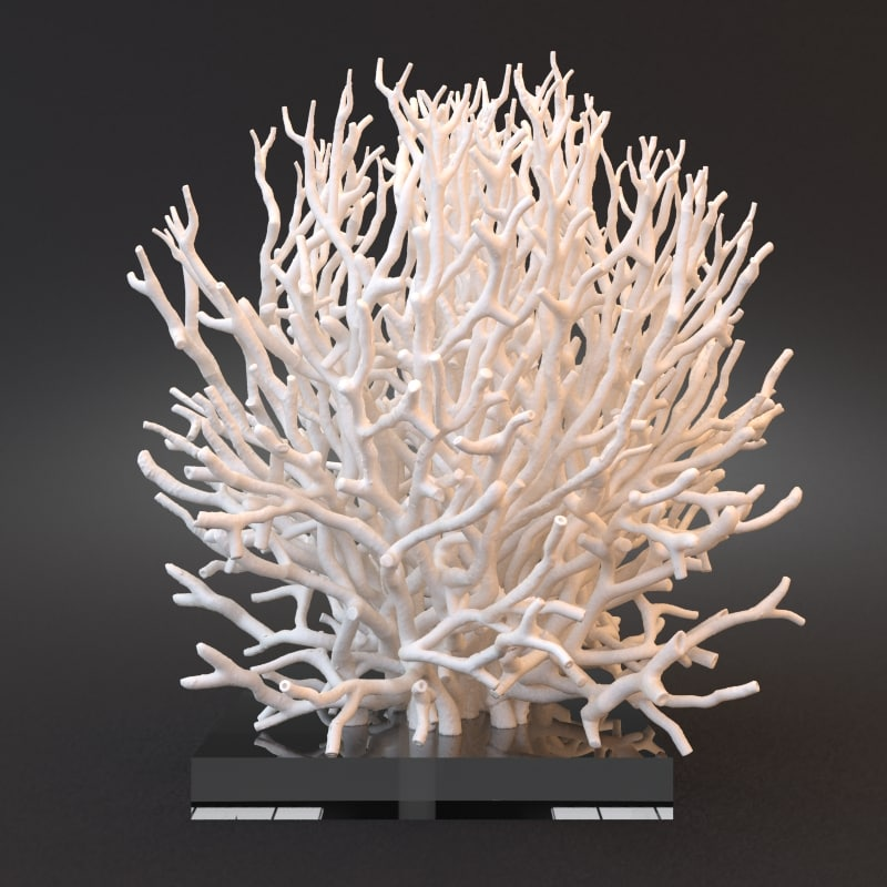 3d white coral model