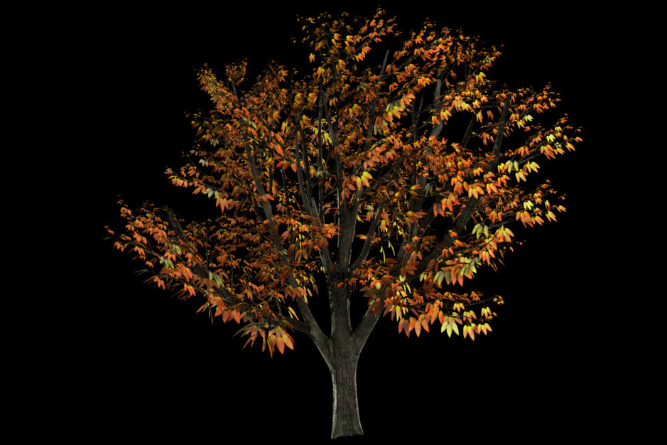 3d tree leaves fall summer