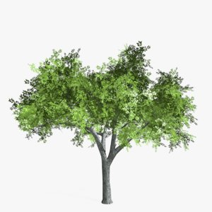 elm tree 3d max