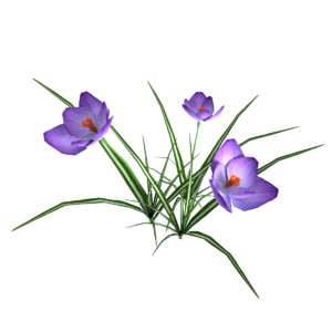 3d realistic crocus model