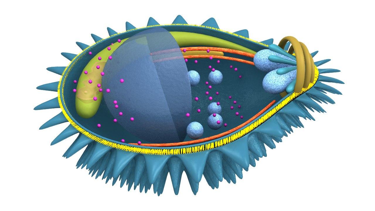 3d plasmodium malaria parasite model