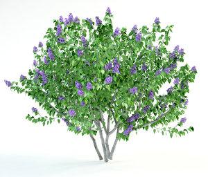 flowering lilac bush 3ds