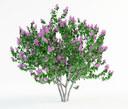 miss kim lilac 3D models