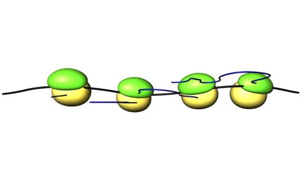 ergosomes ribosomes 3d model