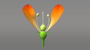obj position gynoecium thalmus flower
