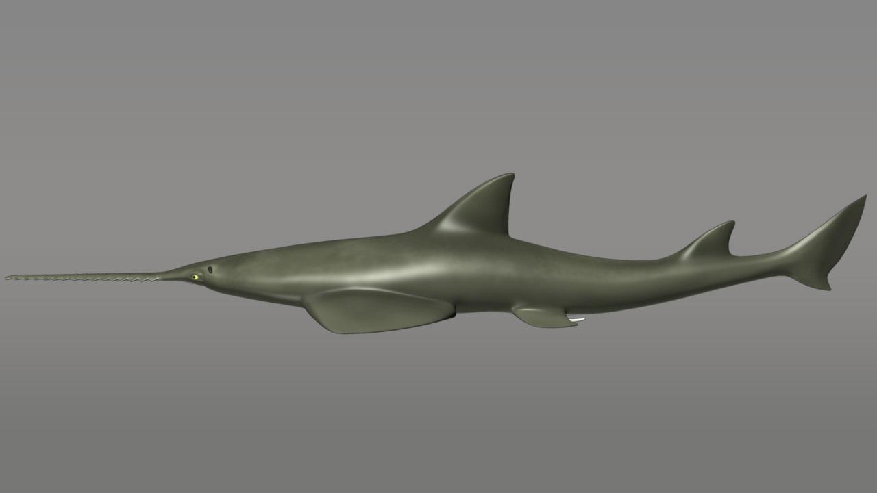 sawfishes sharks 3d model