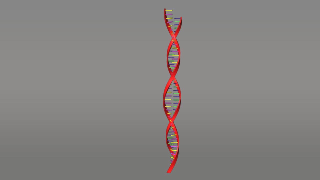protein synthesis 3d model