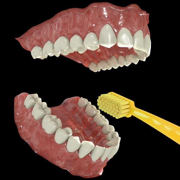 3d human teeth model