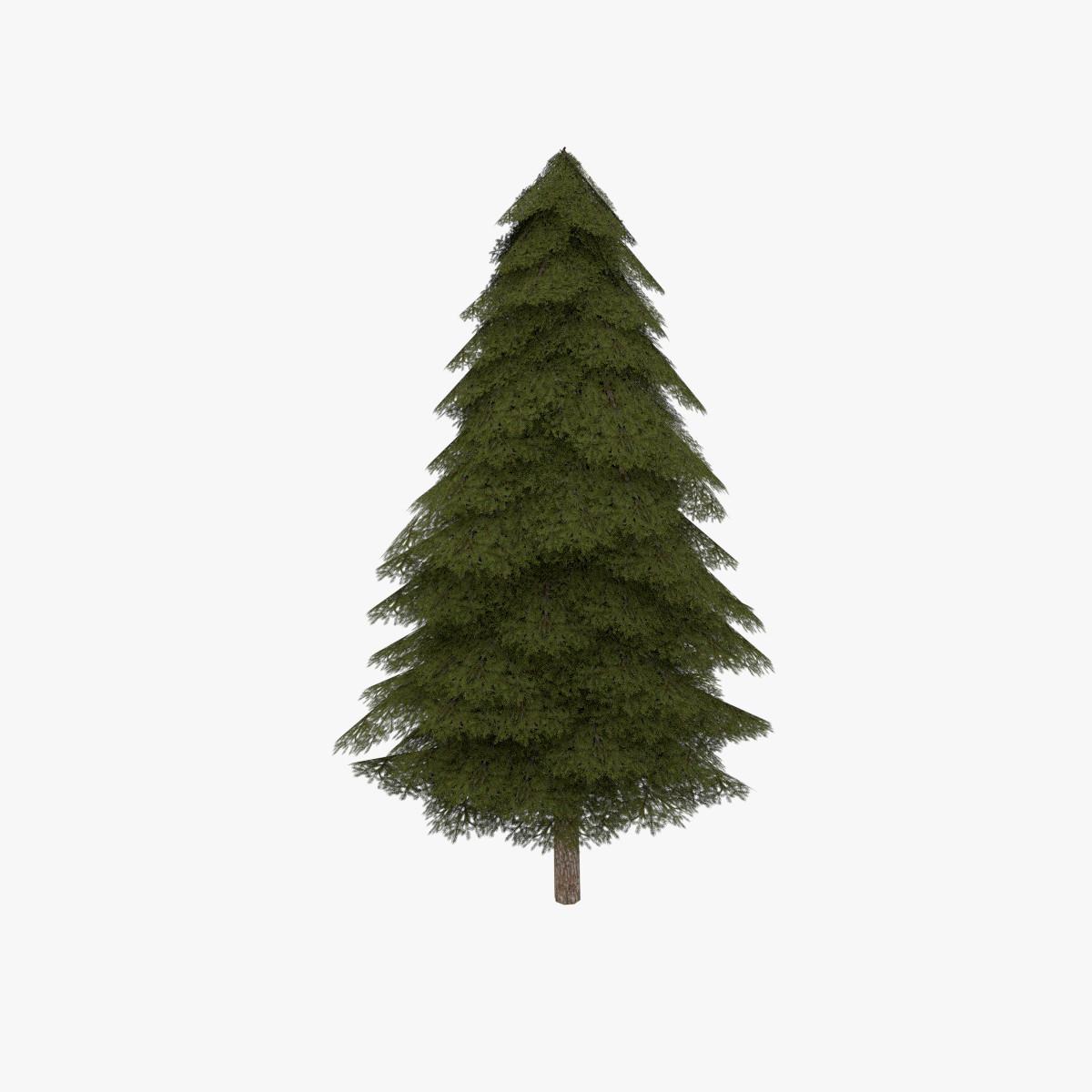 fir evergreen tree
