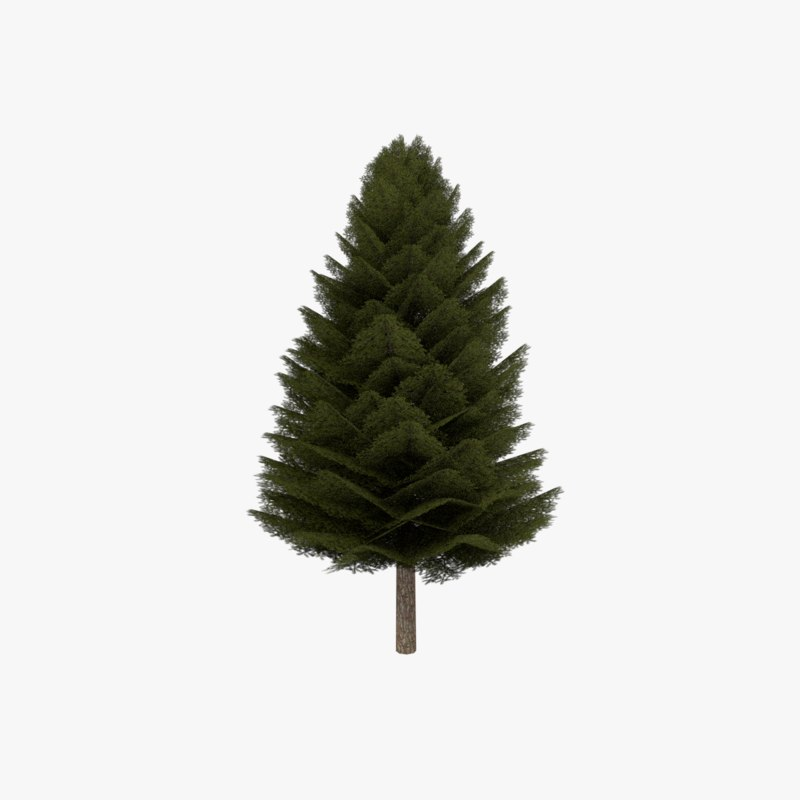 3d model fir evergreen tree