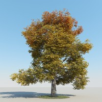 3d realistic maple tree autumn model