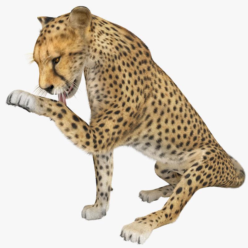 cheetah 2 pose 5 max